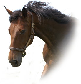 horse training tips from experts