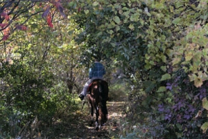 Horse trail riding for training young horses