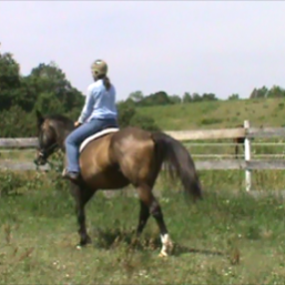novice riders are great learners