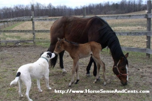 Young horse training ideas with Horse Sense and Cents