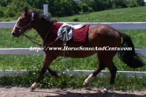 young horse training with Horse Sense and Cents