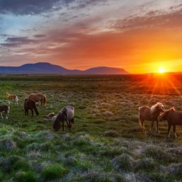 horse care during summer months at http://HorseSenseAndCents.com
