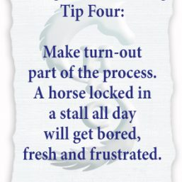 Young Horse Training Tips from http://HorseSenseAndCents.com