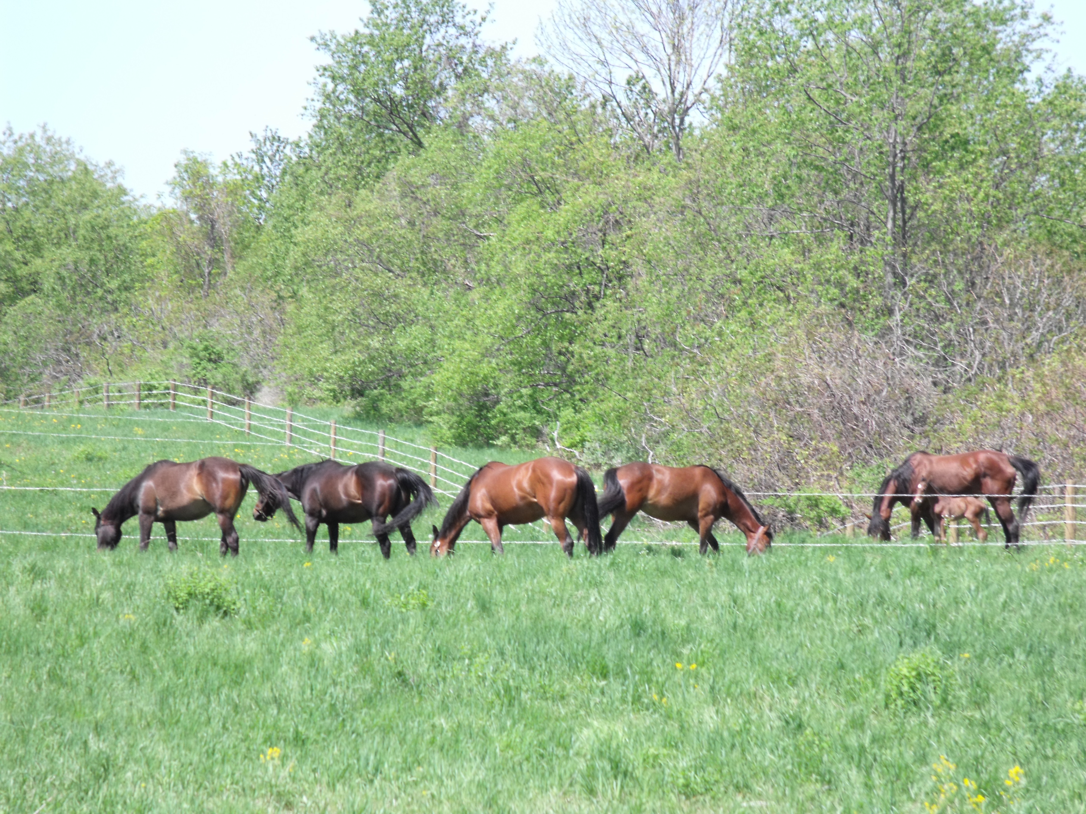 Keeping your small horse boarding business afloat is easier if you have land for turnout options