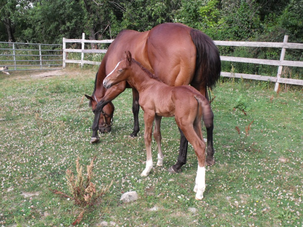 Mares with foals can be a a bigger challenge when you need to find the right kind of horse help