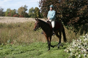 keeping it fun for the horse with young horse training