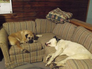 dog couch potatoes