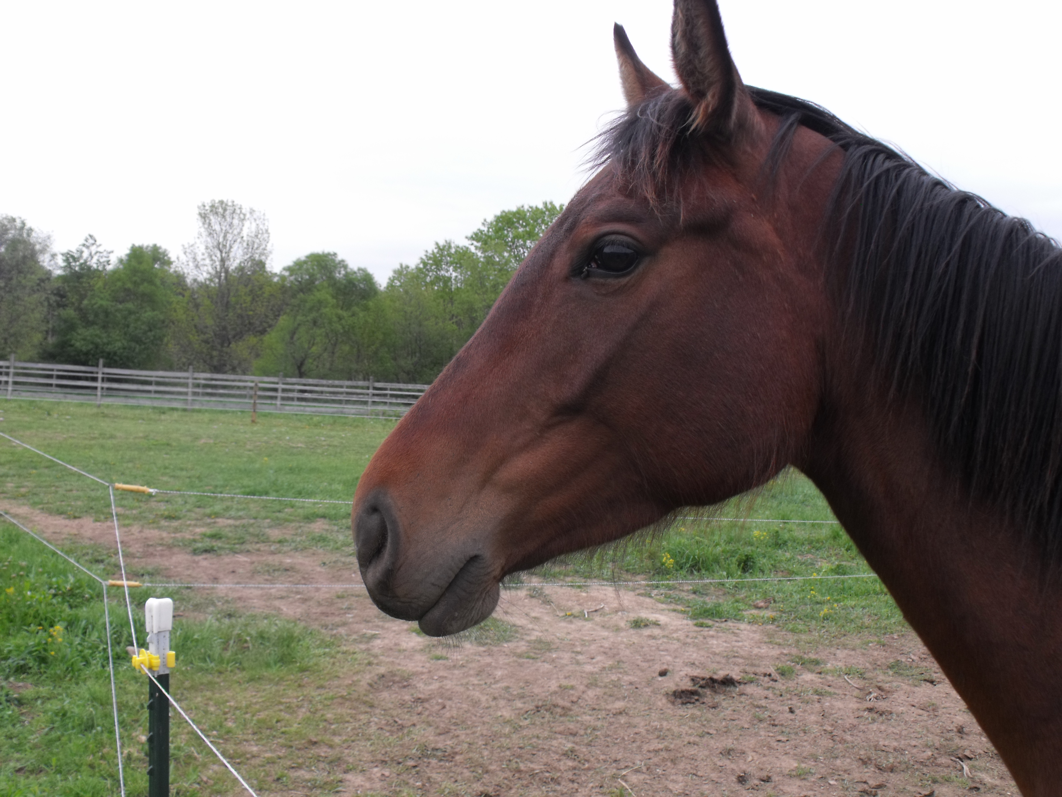 young horse training needs different approaches