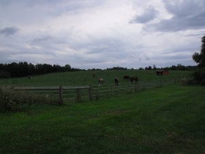 horses in halcyon acres pasture