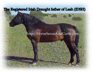 alpha mares from Registered Irish Draughts are creative