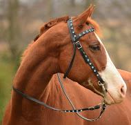 affordable horse tack